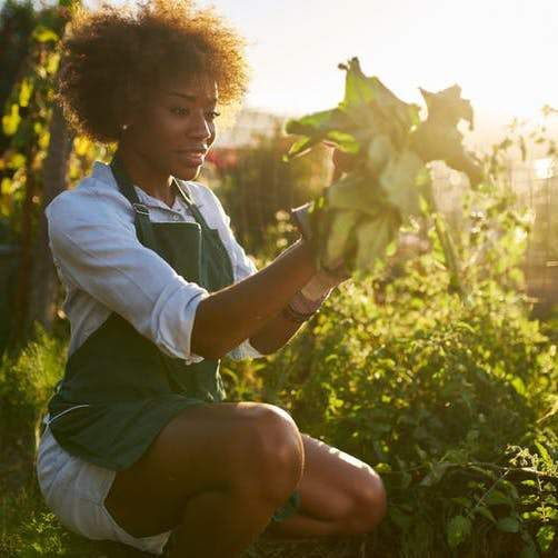 Anxiety and depression: why doctors are prescribing gardening rather than drugs